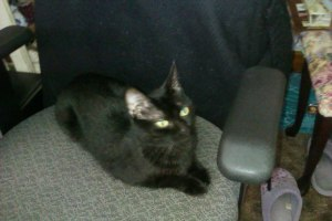 xena in office chair