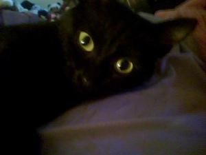 xena's eyes