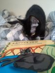 0-a-kittys-veiw-book-arrived